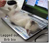 cat_on_keyboard